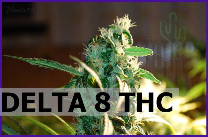 Delta 8 THC Rundown